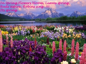 Beautiful-Flowers-HD- spring Wallpapers-beautiful-flowers-mountain copy
